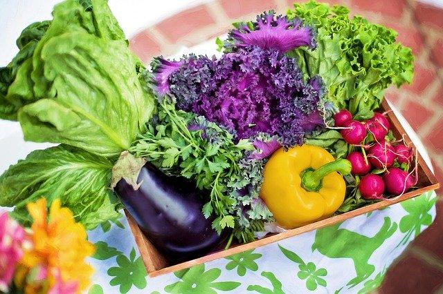 10 conseils de base pour les débutants en matière de jardinage
