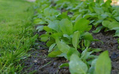 Comment cultiver un sol sain?