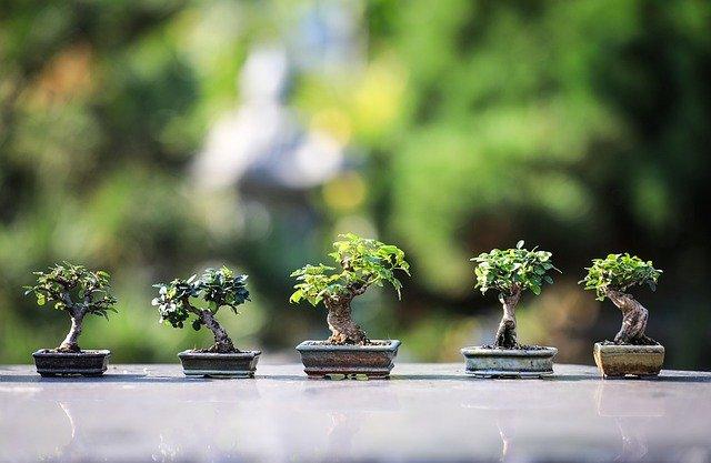 10 conseils jardinage