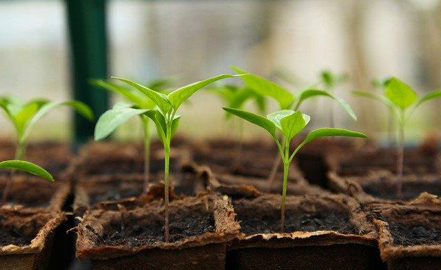 jardinage arrosage